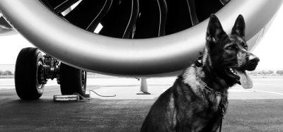 Brisbane Airport introduces new wildlife dispersal programme