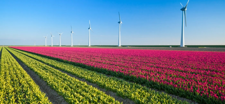 Dutch airports to go green with new wind farm deal