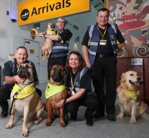 Therapy dog service introduced by Southampton Airport
