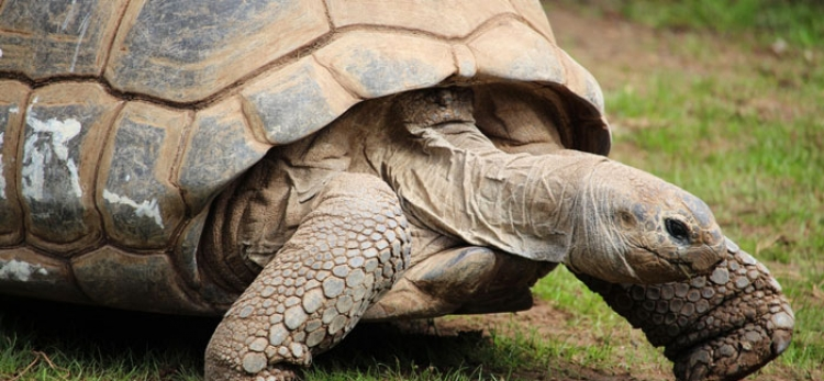 Federal regulation for tortoise management